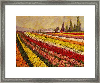 Skagit Valley Tulip Field Framed Print
