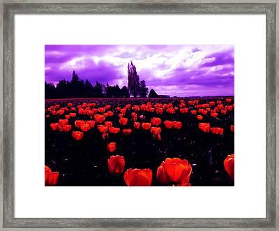 Skagit Valley Tulips Framed Print