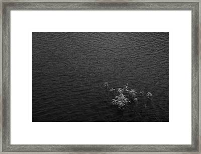 Skc 4573 Water Dwellers Framed Print by Sunil Kapadia