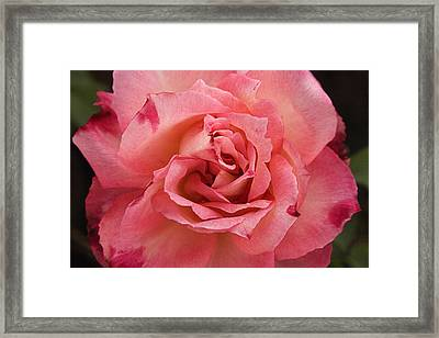 Skc 4942 The Pink Harmony Framed Print by Sunil Kapadia
