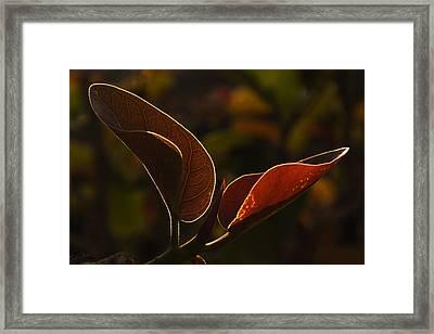 Skc 9841 Lovable Pair Framed Print by Sunil Kapadia