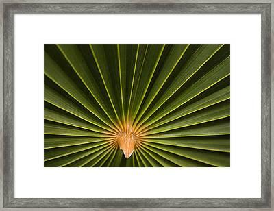 Skc 9959 The Palm Spread Framed Print by Sunil Kapadia