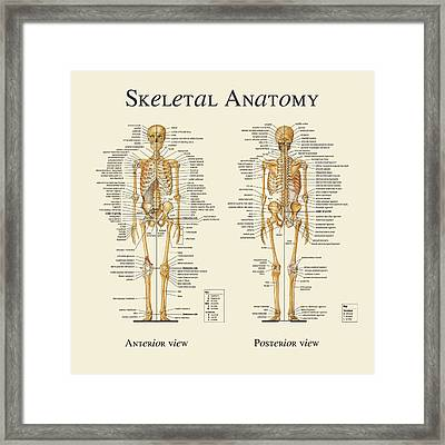 Skeletal Anatomy Framed Print by Gina Dsgn