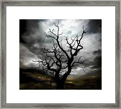 Skeletal Tree Framed Print by Meirion Matthias