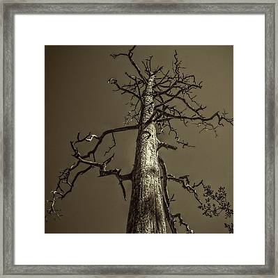 Skeletal Tree Sedona Arizona Framed Print