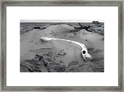 Skeleton Coast Whalebone Framed Print by Susan Chandler