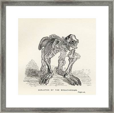 Skeleton Of The Megatherium From The Framed Print