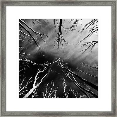 Skeleton Trees  Framed Print