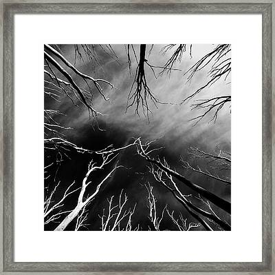 Skeleton Trees 2 Framed Print by Mihai Florea