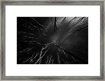 Skeleton Trees Framed Print by Mihai Florea