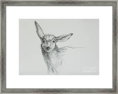 Sketch Of A Mule Deer Doe Framed Print by Dawn Senior-Trask