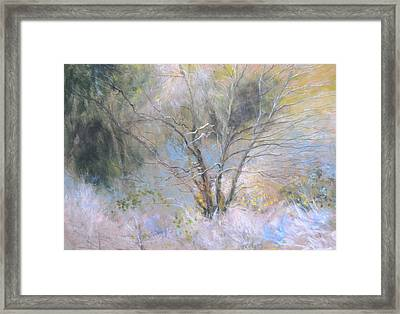 Sketch Of Halation Effect Through Trees Framed Print
