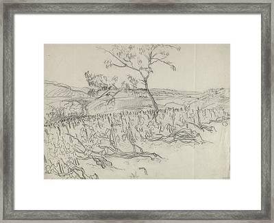 Sketch Of Vineyard Framed Print