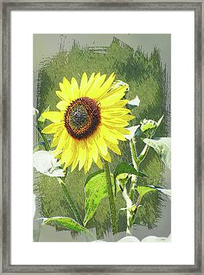 Sketchy Sunflower 1 Framed Print by Marty Koch
