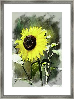 Sketchy Sunflower 2 Framed Print by Marty Koch