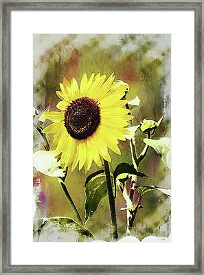 Sketchy Sunflower 3 Framed Print by Marty Koch