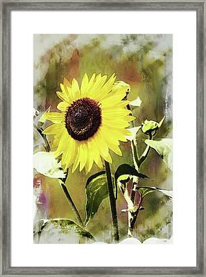 Sketchy Sunflower 3 Framed Print