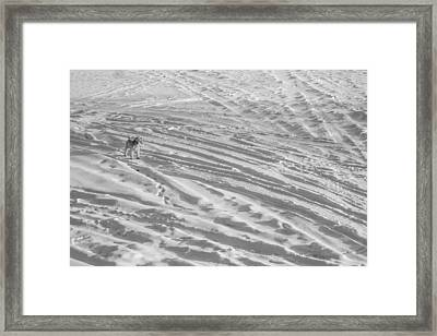Ski Dog Framed Print by Gunther Schabestiel