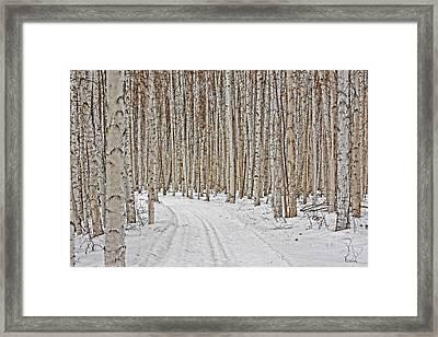 Ski Trail Framed Print