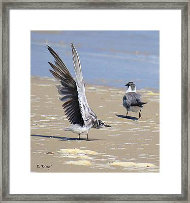 Skiddish Black Tern Framed Print