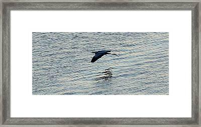Skimmer Framed Print by John Glass