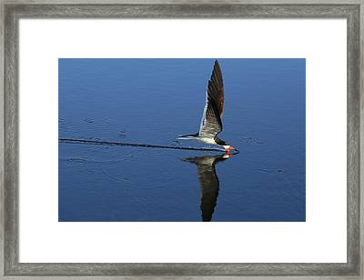 Skimming Off The Top Framed Print