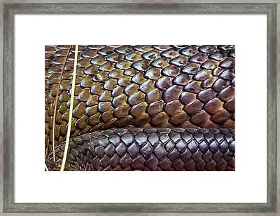 Framed Print featuring the photograph Skin Of Inland Taipan by Miroslava Jurcik