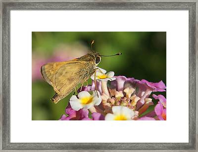 Skippers Keepers Framed Print by DiDi Higginbotham