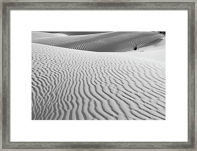 Skn 1457 Nature's Composition Framed Print
