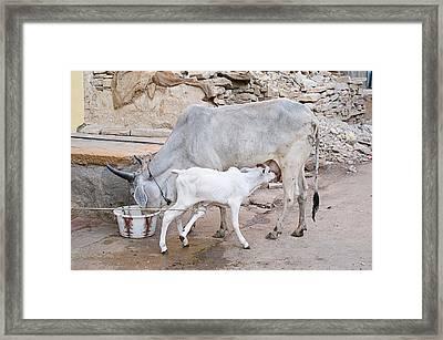 Skn 1654 Feeding Time Framed Print by Sunil Kapadia