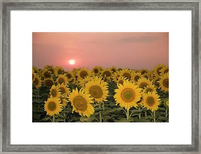 Skn 2179 Sunflower Landscape Framed Print