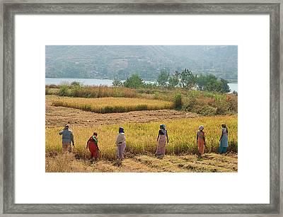 Skn 2617 Family Business Color Framed Print