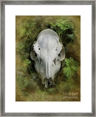 Skull And Leaves Framed Print