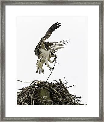 Sky Ballet Framed Print by Everet Regal