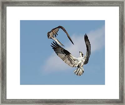 Sky Duel Framed Print