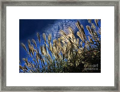 Sky Dusters Framed Print