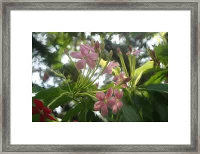 Sky Flower Framed Print