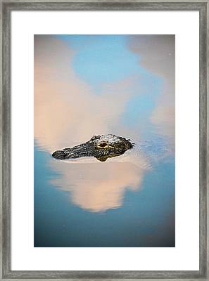 Sky Gator Framed Print
