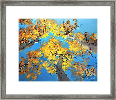 Sky High Aspen Trees Framed Print