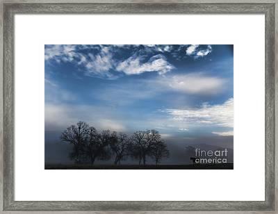 Sky, Horses And Trees Framed Print by Stephanie Laird