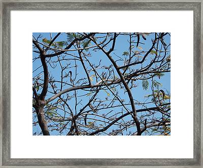 Skylight Framed Print