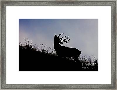 Skyline Monarch Framed Print