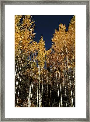 Skyward Aspens Framed Print