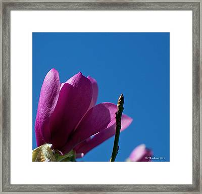 Skyward Framed Print by Betty Northcutt