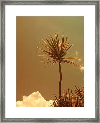 Skyward Bound Framed Print by Florene Welebny