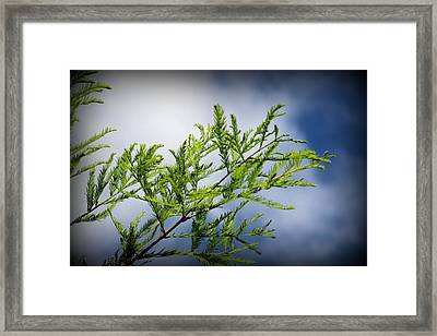 Skyward Framed Print by Carolyn Stagger Cokley
