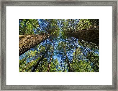 Framed Print featuring the photograph Skyward by Gary Lengyel