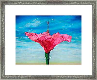Skyward Framed Print by Kerri Meehan