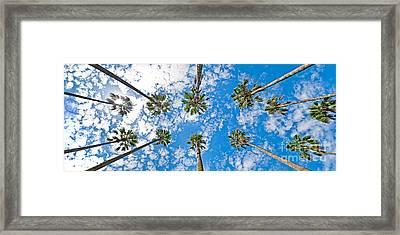 Skyward Palms Framed Print