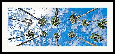 Skyward Framed Prints